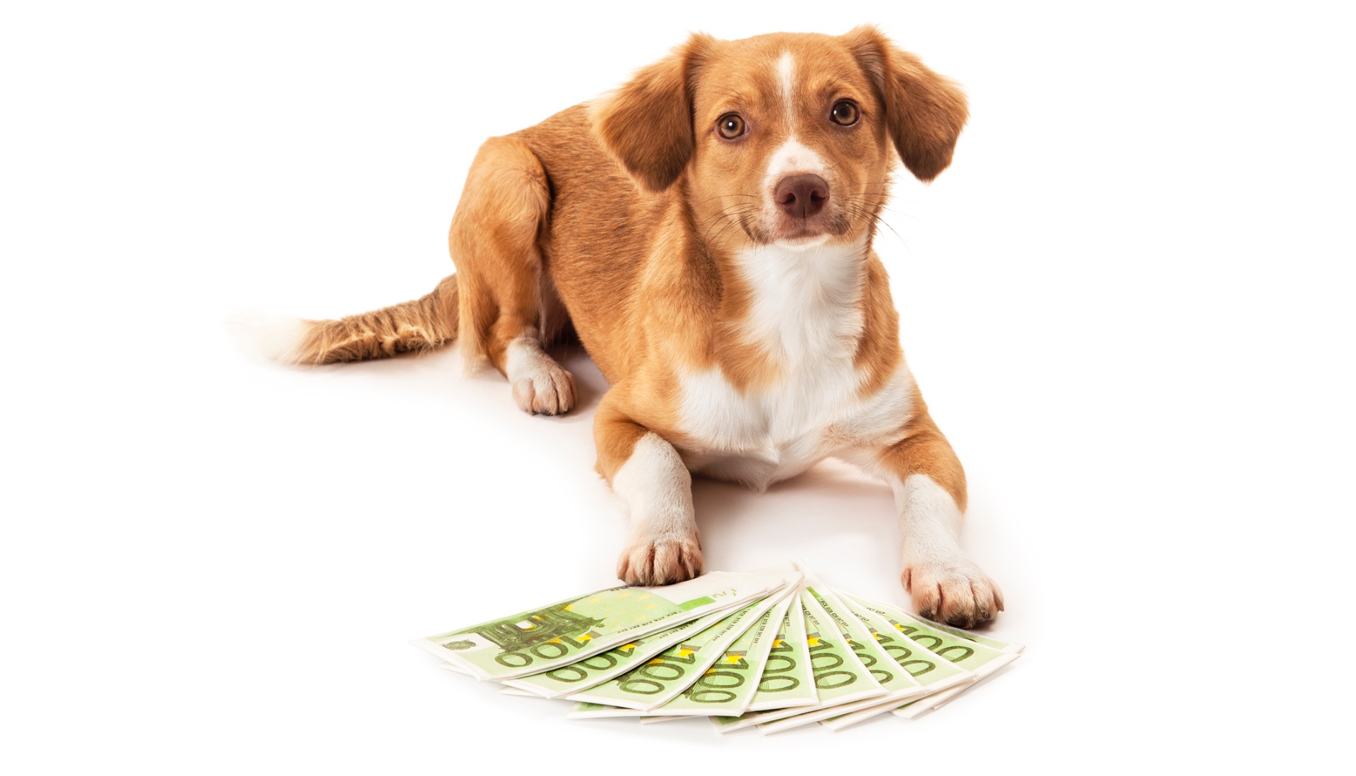 Mind Body Paws: Happy Money For Animals with Ken Honda